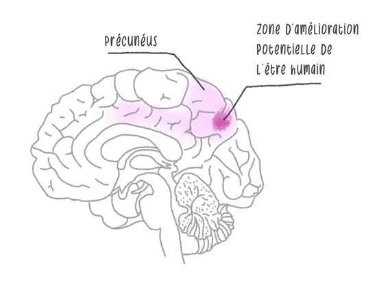 pourquoi méditer modifie le cerveau